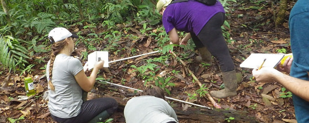 Environmental students conduct field work in Costa Rica.